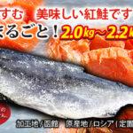 [yn-52]紅鮭(甘塩・2.0~2.2kg)
